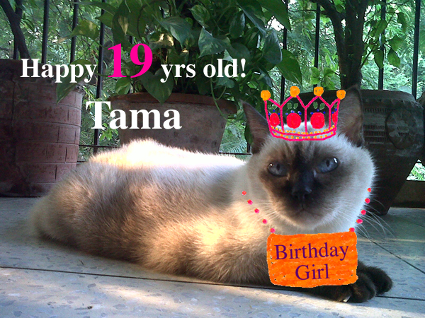 Tama_4